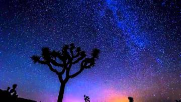 joshua-tree-nuit